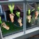 Lese-Möhrchen und Fenster-Karotten