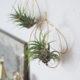 DIY Luftpflanzenhalter aus Draht