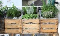 Urban Gardening auf unserem Balkon