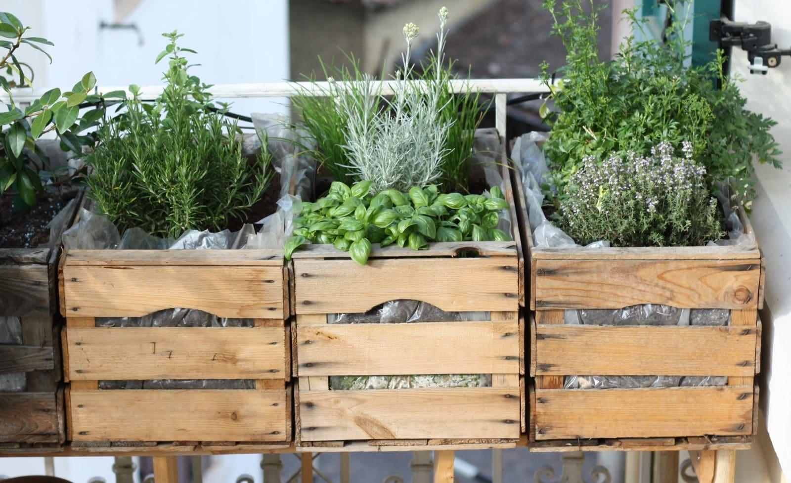 urban gardening auf unserem balkon handmade kultur. Black Bedroom Furniture Sets. Home Design Ideas
