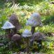Magic Mushrooms - Die einfachsten Betonpilze der Welt