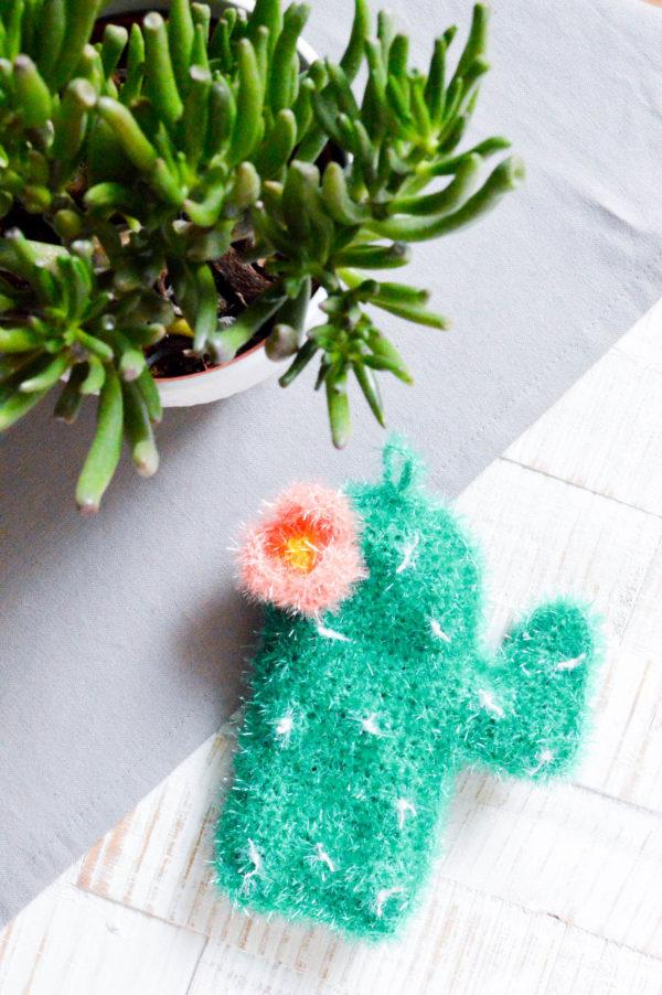 Kaktusschwamm