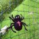 Eine gehäkelte Spinne für Halloween