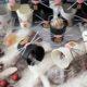 niedlicher Adventskalender – nicht nur für Katzenfans