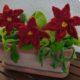 Der pflegeleichte Blumenkasten für die Weihnachtszeit