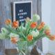 Fast schon Frühling: Tulpen & Schneeball