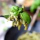 Leichtes Basilikum-Pesto mit Joghurt - Easypeasy Feierabend-Rezept