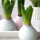 DIY - Hyazinthen in Wachs - Frühlingsdeko in Pastell