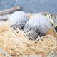 Osterdeko mal anders – Drachen-(Oster)-Eier easy selber machen