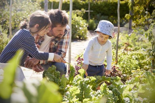 Kreativ und lecker aus dem eigenen Garten!