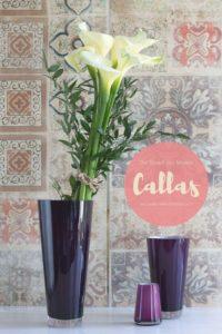 Trendfarbe Violett: tolles Styling für weiße Callas