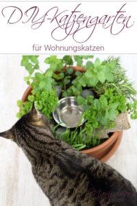 DIY-Katzengarten für Wohnungskatzen