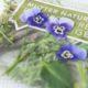 Blumen trocknen und pressen in 2 Minuten!