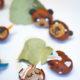 Süße Kastanien-Tiere