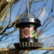 DIY: Vogelfutterspender