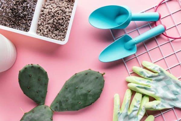 Kaktus umtopfen ohne gestochen zu werden