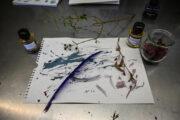 Tinte und Zeichengeräte aus Naturmaterialien – Online Workshop
